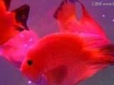 上海观赏鱼销售 配送观赏鱼 鱼缸上门护理清洗