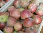 山东苹果基地嘎啦美八红露苹果产地直销今日价格