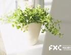 成都武侯区鲜花租赁公司教你多本菊的栽培技术