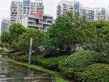 城西和风雅颂别墅536平出售 赠庭院花园和风雅颂别墅