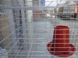小鸡笼子/雏鸡笼/雏鸡育成设备/育雏鸡笼价格-安平兆东鸡笼厂