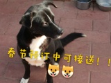 北京宠物寄养,长短期托管养老,单间散养带暖气,春节预订