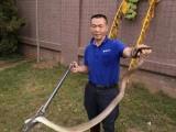 深汕合作区防蛇捕蛇 抓蛇找春华捕蛇公司