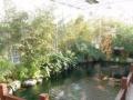 园林景观设计施工、风水鱼池、假山凉亭景观、绿化养护