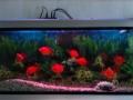 壁挂式鱼缸可遥控