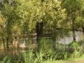 拉市土地水淹地10亩农用地2亩对外出租