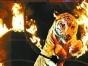 万安山野生动物欢乐世界+隋唐国际大马戏一日游