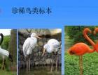 百鸟巡展出租特色百鸟展租赁提供优质百鸟展
