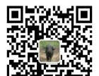 黑龙江藏香猪 鹤北原森品牌 绿色原始森林放养藏香猪