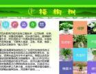 徽州区 水培 鲜花 盆栽 免费配送