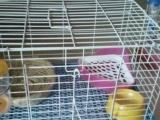 宁夏银川萌兔乐园,出售自家繁殖得宠物兔