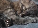 好心人免费救助一只的小黑猫