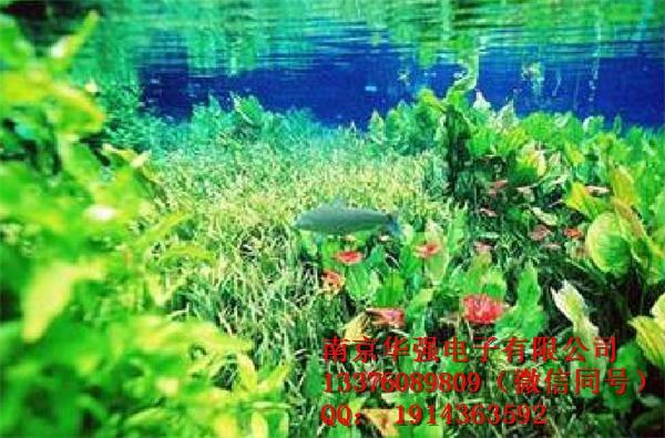 水族灯多少钱 吉日水族灯生产厂家,做灯,华强如鱼得水
