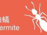 上海室内消毒除虫,除螨虫,除蟑螂,跳蚤,除白蚁
