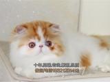 齐齐哈尔买猫 眼鼻加菲猫多只找新家健康保证 可上门 全国包邮