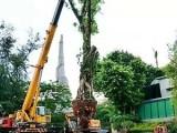 广州修剪树枝草坪清理绿化垃圾