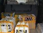 昆明宠物托运、宠物空运全国,宠物快递