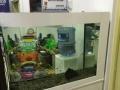 乐天阳生态鱼缸3年免换水的鱼缸