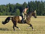 骑马性价比较高的地方-英伦骑士马术俱乐部