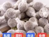 广州黄边家化药业清宫丸OEM拉线丸消妆械字号厂家