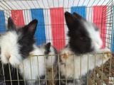 仓鼠,金丝熊,荷兰猪和宠物兔!