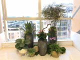 广州办公室绿植租赁 花卉租摆