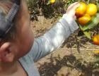 上海郊区农家乐旅游 搓麻绳 采橘子 池塘钓大闸蟹
