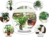 苏州园林绿化养护庭院绿化养护