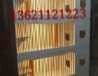 猫咪繁殖柜笼/双笼柜/单笼柜/多组合式柜笼龙猫展示柜厂家直销