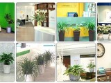 红谷滩办公室花卉绿植租摆零售 红谷滩室内绿植写字楼花草