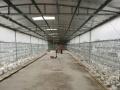 新会周边 睦洲白鸽场出租 设备齐全 土地 10000平米