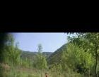 山林土地 土地 40000平米