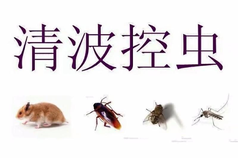 酒店灭鼠 商场灭鼠 工厂灭鼠 院校等灭鼠除虫 清波专业20年