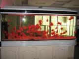 深圳专业定做鱼缸 水族箱 鱼缸清洗维护 定做鱼缸哪里有