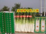 山东大葱种子 高产新品种 家禄三号 章丘大葱种