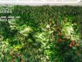 生态墙加盟,绿墙加盟,植物墙加盟,立体绿化加盟