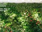 植物墙加盟 新型模块植物墙
