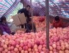 当季大量新鲜苹果 板栗 花生供应