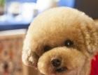 找宠物美容师合伙人