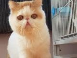 加菲猫3小公
