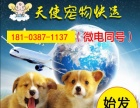 济南天使宠物托运服务中心支持淘宝下单