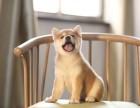 哈尔滨哪里有柴犬卖多少钱 柴犬好养吗 柴犬照片