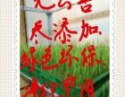 余江芽苗菜工厂转让