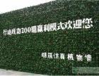 室内绿色植物墙 明筑装扮夏日清凉家居