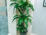 辦公樓綠植租擺綠植銷售植物租賃開業喬遷花籃