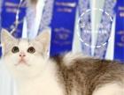 专业家庭式繁殖纯种英短蓝白 蓝猫 银渐层可上门挑选