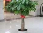 天津市绿植租赁花卉租赁办公室绿植租摆公司哪家好