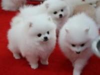 杭州哪里有小狗领养 杭州哪里有小狗赠送