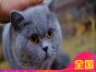 哪里有蓝猫蓝猫多少钱包健康签协议