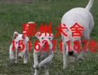 四川杜高犬价格